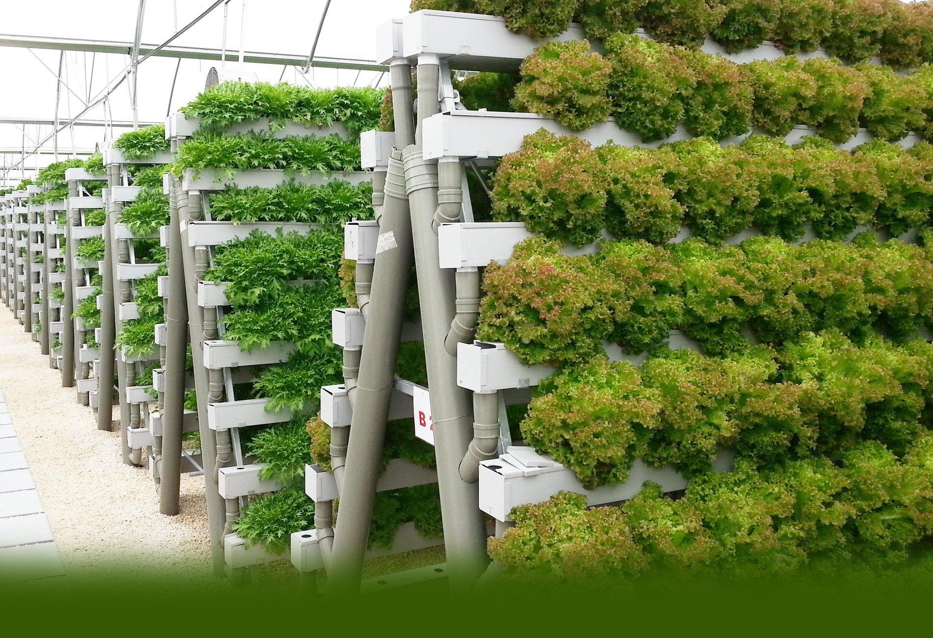 Гидропонная установка для выращивания зелени дома: сборка и 65